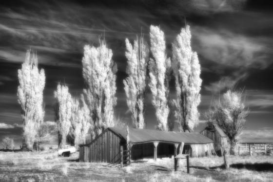 Ghosts of the sagebrush 8