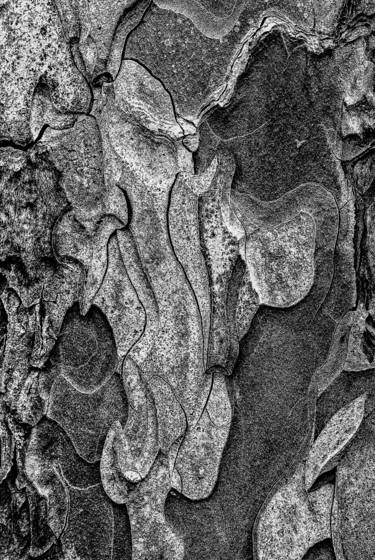 From the bark of a single tree 1