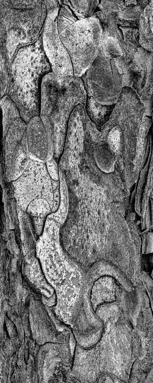 From the bark of a single tree 2