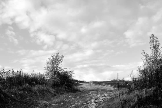 Beech hill barrens