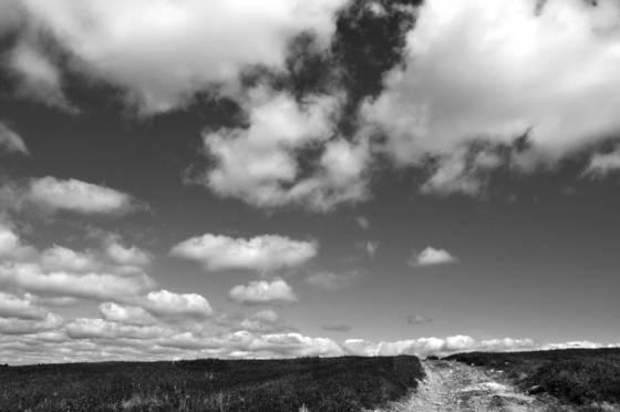 Ryan road blueberry barrens