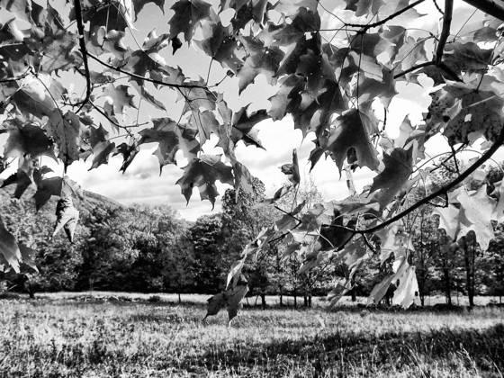 Catskill autumn canopy