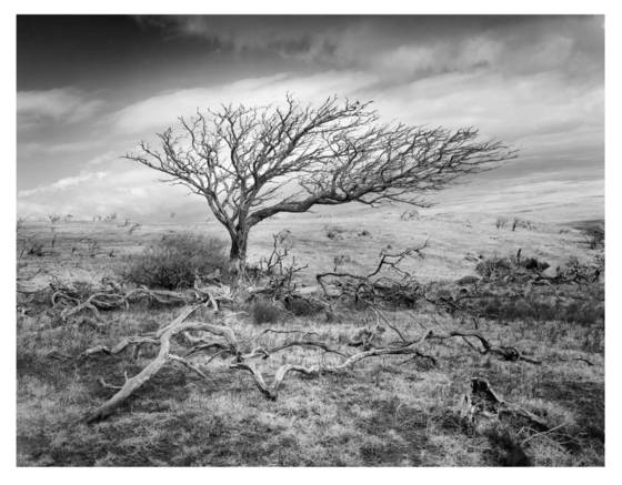 1    tree ossuary