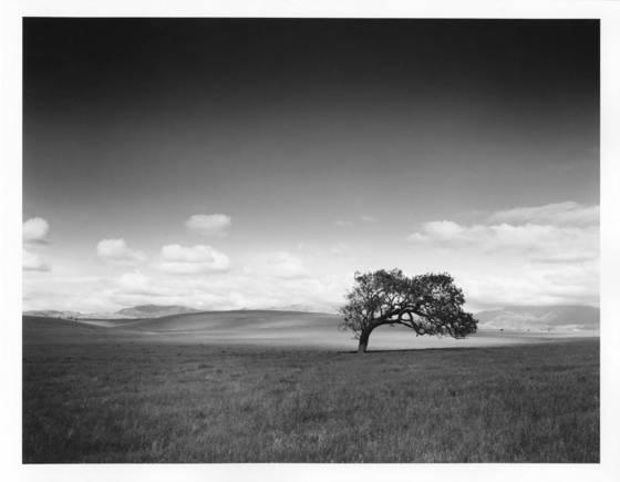 12    solitary oak