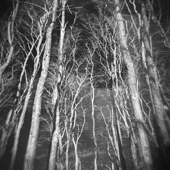 Mijo in the trees
