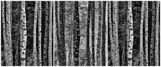 Triptych trees reverse