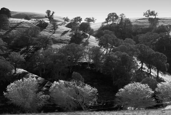Among the corduroy hills  06