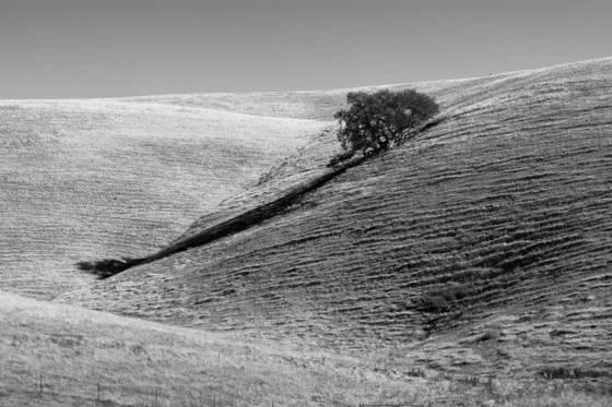 Among the corduroy hills  09