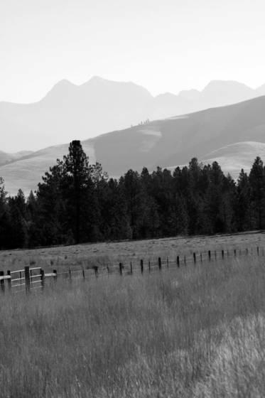 Pastureland 2