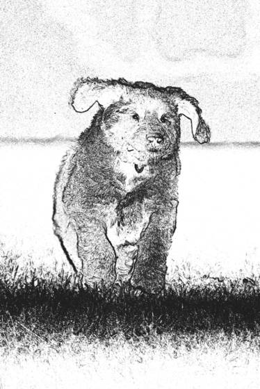 Cecil  3