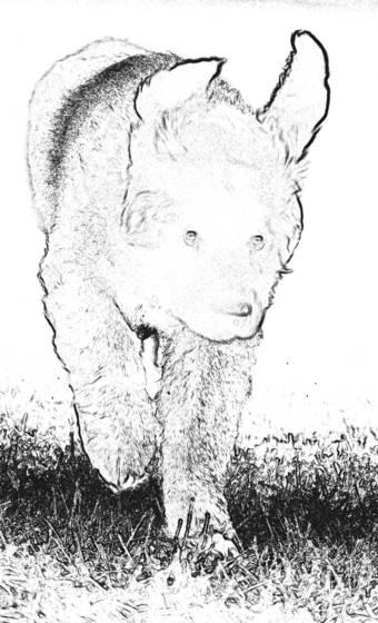 Cecil  4