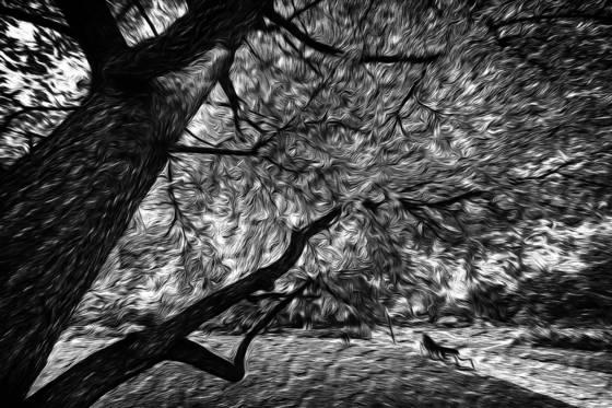Photo impressionism 06