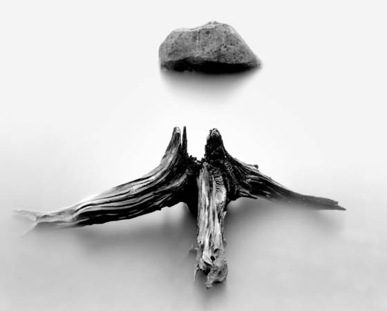 Rock and driftwood