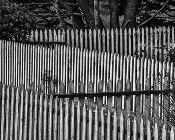 Fence study