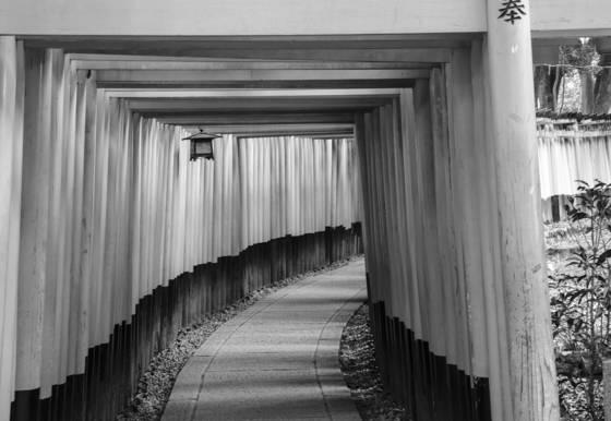 Fushi inari torii gates