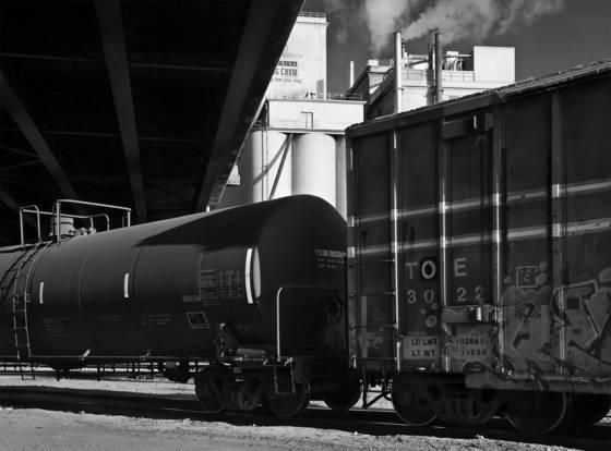 Purina train
