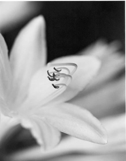 Flower stem 3