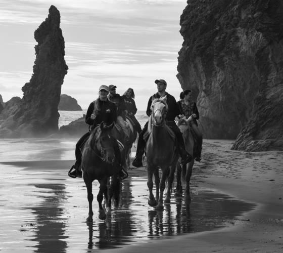 Bandon horses 5476