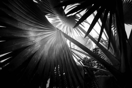 Palm exploration