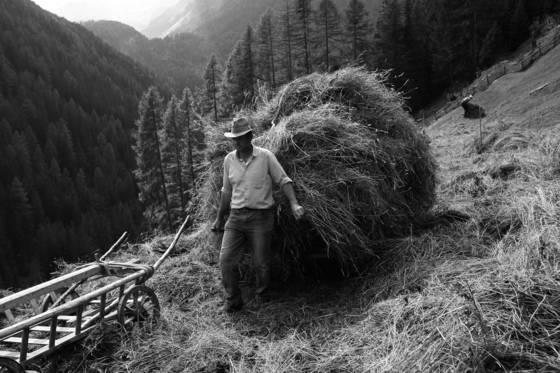 Harvesting hay 01