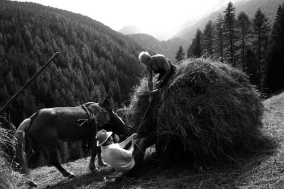 Harvesting hay 03
