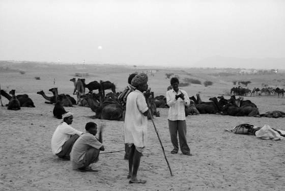 Camels and herdsmen