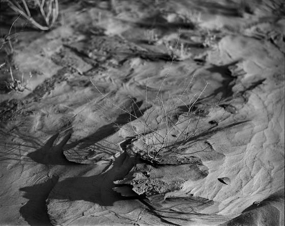 Desert texture  2
