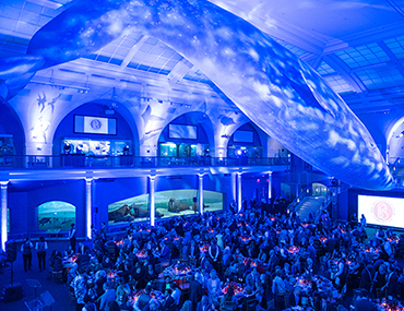 Bank Street's annual fundraising dinner beneath the blue whale in the Hall of Mammals at the American Museum of Natural History