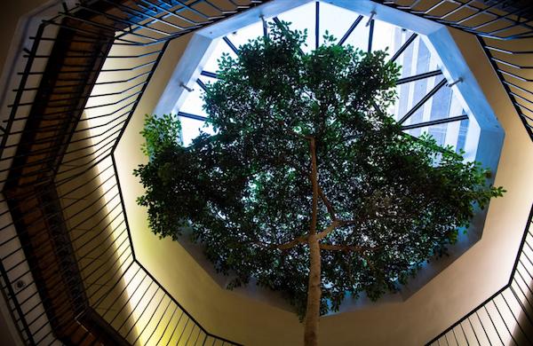 Bank Street lobby tree