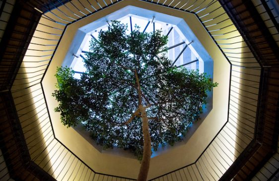 Tree in Bank Street lobby