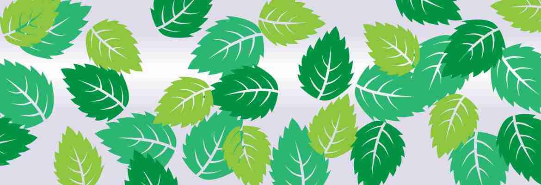 Herbal Leaves Illustrated