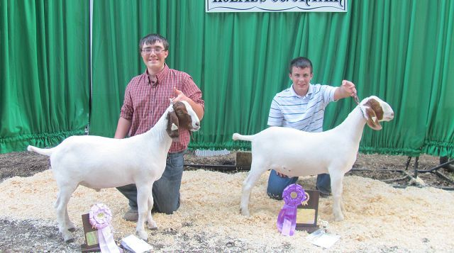 Market goat competition shows three of four top… | The Bargain Hunter