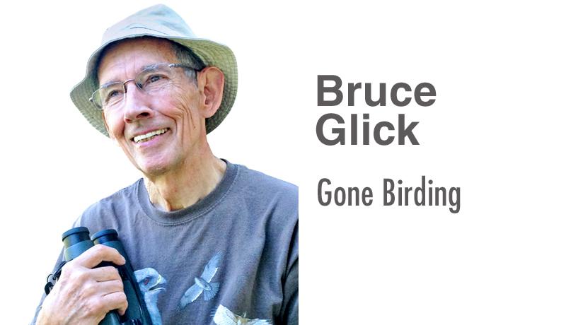 Bruce Glick: Gone Birding