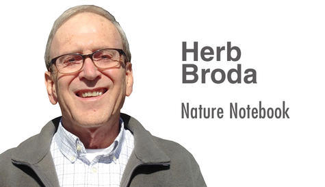 Herb Broda: Nature Notebook