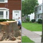 Treescape Trauma In Bloomfield