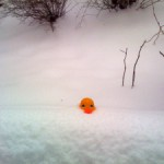 A Day To Hibernate