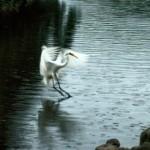 Photographer Scot Surbeck Sends His Egrets