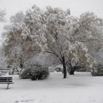 Snowbound (Again)