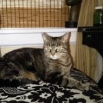 Molly the Cat, Breast Cancer Survivor, Needs a Home