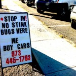 Hold Your Nose: It's Stink Bug Season in NJ