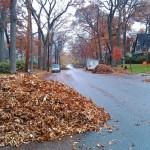 Leaf Slalom