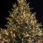 Tree Lightings Around Baristaville