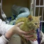 Man Finds Abandoned Kitten