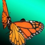 Déjà vu Giveaway: Tickets to Butterfly:The Story of a Life Cycle at SOPAC