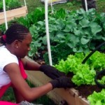 "Transplanting ""A Lot to Grow"" Community Garden"