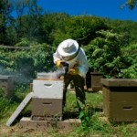 Meant to Bee: Hives, and Honey, Just Out the Back Door