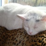 PAWS Cat Adoption Events Saturday, September 17