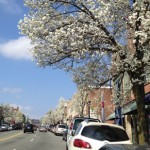 Bradford Pears: Enjoy 'Em While You Can