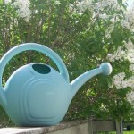 Pat Kenschaft: How I Became a Gardener