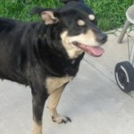Female Mixed-Breed Dog Found in Bloomfield